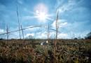 Meteorologové varují před vysokými teplotami. Ty mohou překročit až 36 stupňů