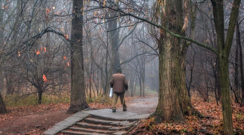 městká zeleň, procházka, morguefile.com
