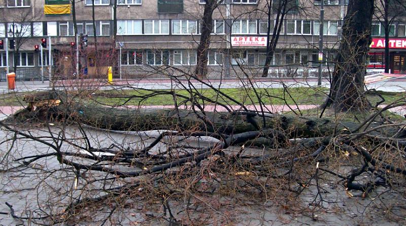 popadané stromy větrem, wikimedia.org