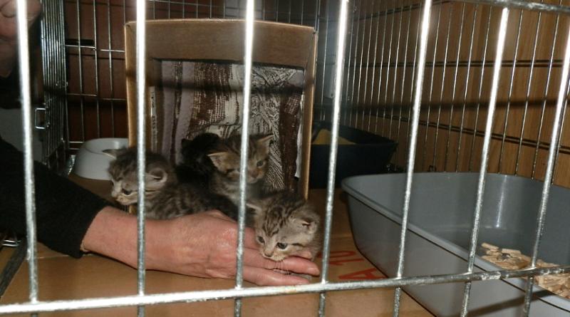 nalezená koťata v krabici, mpplzen.cz