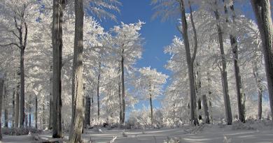 Zima ještě nekončí! V dalších dnech se prudce ochladí a hrozí náledí