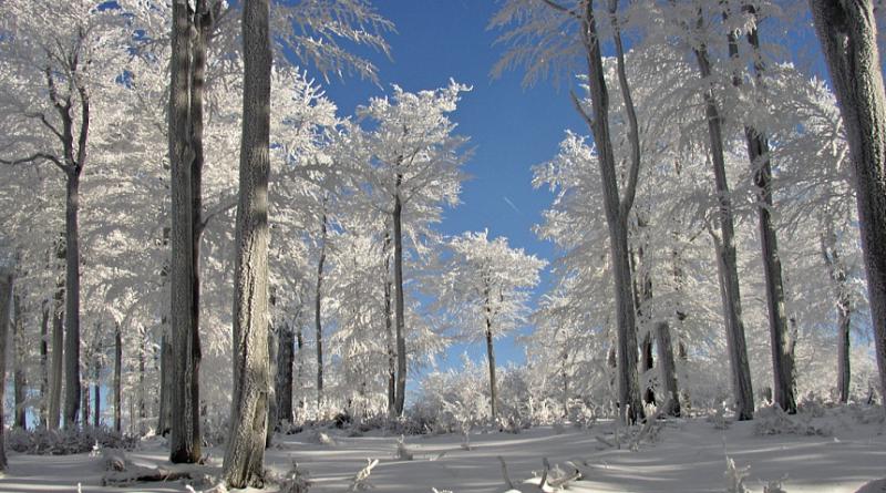 zima, mráz, wikimedia.org